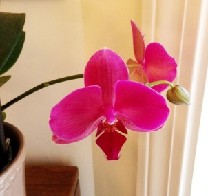 New buds on a rescue orchid prove that beauty sprouts when love is given.